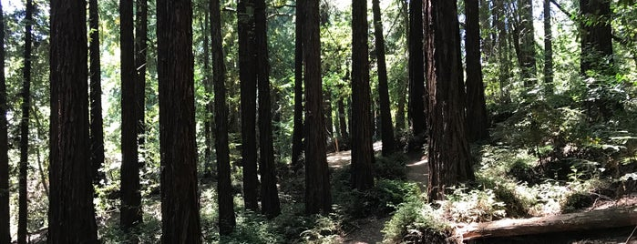 Big Trees Trail is one of To-Do in San Francisco.