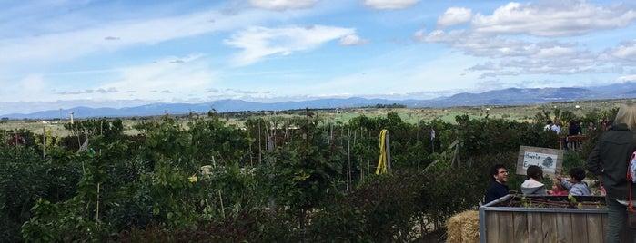 Huerta de Montecarmelo is one of Resumen 2011.