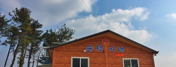 순덕이네해산물장터 is one of All about Jeju.