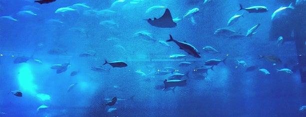 Dubai Aquarium is one of Dubai's very best Places = P.Favs.