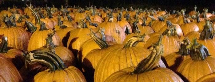 Heap's pumpkin farm is one of สถานที่ที่ Ed ถูกใจ.