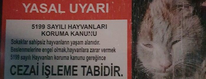 Özgürlük Parkı is one of Locais salvos de Yasemin Arzu.