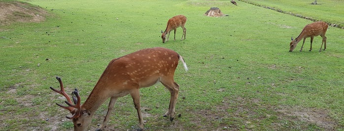 Nara Park is one of Hourie's Liked Places.
