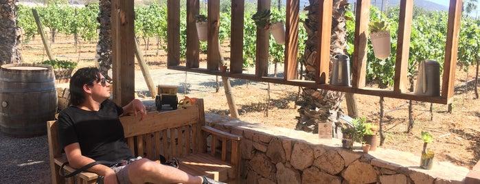 Lechuza Vineyard is one of Baja California.