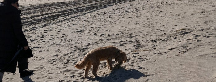 Amagansett Beach is one of Long Island.