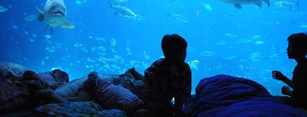 ジョージア水族館 is one of 7 Spots for Late-Night Atlanta Fun.
