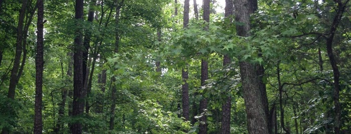 William B. Umstead State Park is one of Raleigh Favorites.