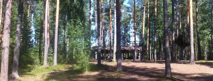 Tuulenpesä is one of สถานที่ที่ Juho ถูกใจ.