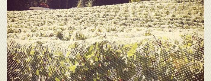 Ribera Vineyards is one of Portland, OR.