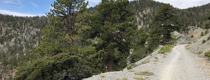 Lower Bristlecone Trail is one of Lizzieさんの保存済みスポット.