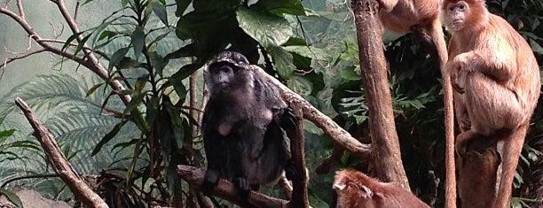 JungleWorld is one of Lugares guardados de Teresa.