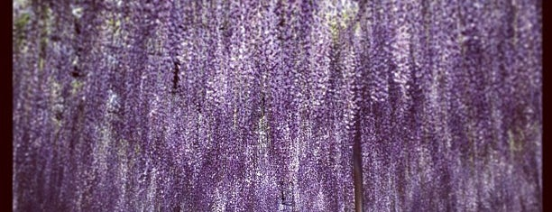 Ashikaga Flower Park is one of 足利.