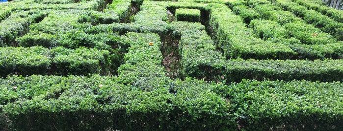 Neild Avenue Maze is one of Sydney.