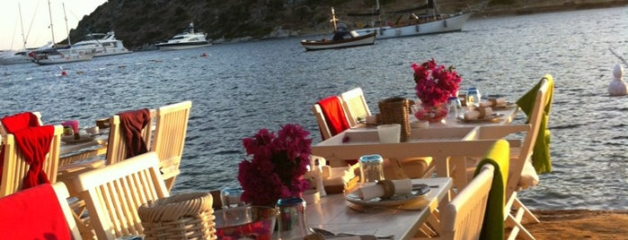 Mimoza is one of Bodrum Bodrum.