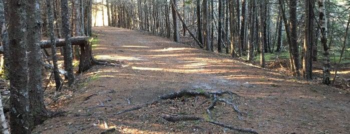 Wonderland Hiking Trail is one of Colin : понравившиеся места.