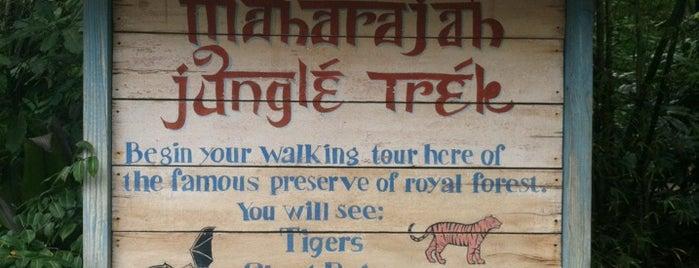 Maharajah Jungle Trek is one of #WDW Fave Spots.