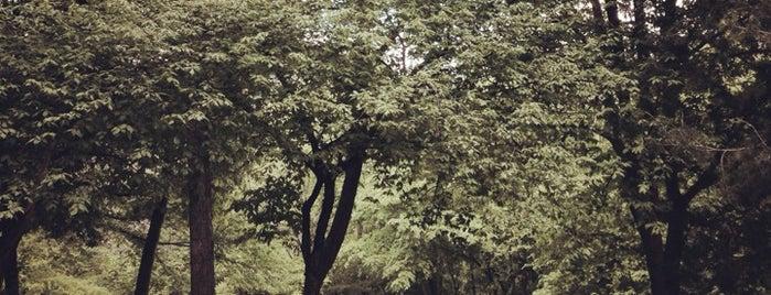 Hyde Park is one of Lieux qui ont plu à Shawn.