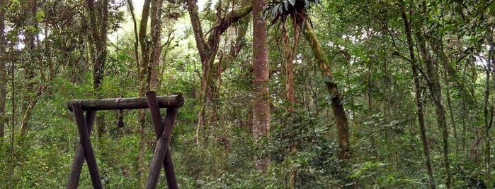 Bosque Reinhard Maack is one of Parques - Curitiba.