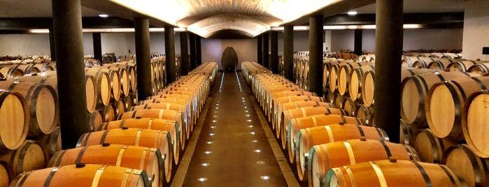 Clos Apalta Winery is one of Lugares favoritos de Alexandre.