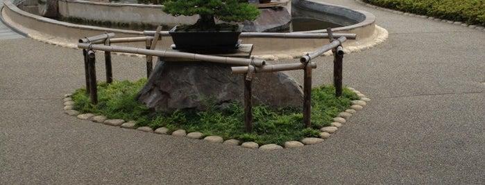 Omiya Bonsai Art Museum, Saitama is one of todo.tokyo.