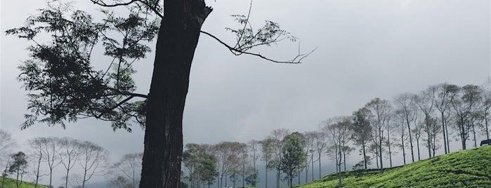 Pagar Alam is one of Orte, die Baba gefallen.