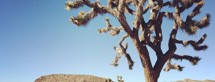 Joshua Tree National Park is one of The Joshua Tree Field Guide.