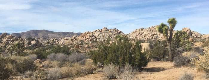 Gamma Gulch is one of Joshua Tree.