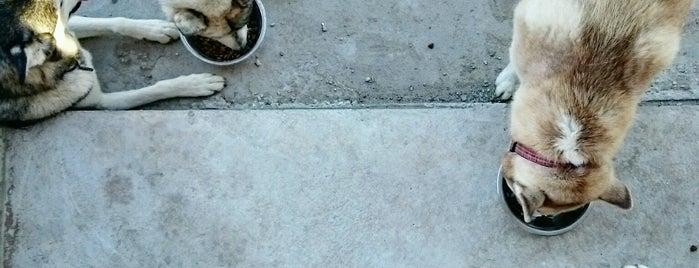 Bentley's Biscuit And Bones is one of dog friendly in North Austin.