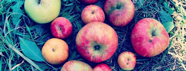 Apple Jacks Orchard is one of Excellent Farms for Apple Picking.