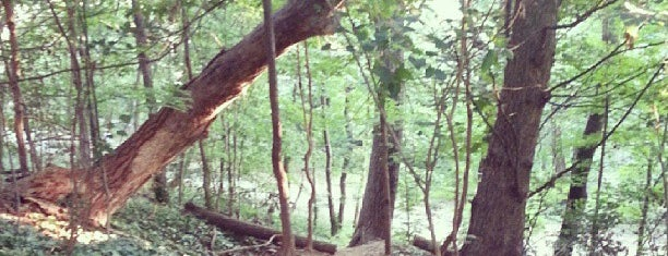 Rock Creek Park (P St & 23rd St) is one of DC Bucket List.