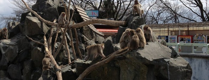 長野市城山動物園 is one of Gespeicherte Orte von DOT HOSTEL.