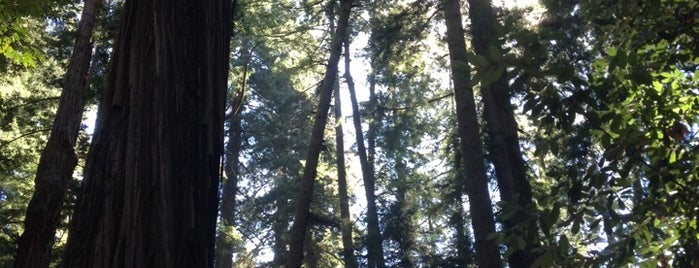 Henry Cowell Redwoods State Park is one of Tempat yang Disukai IS.
