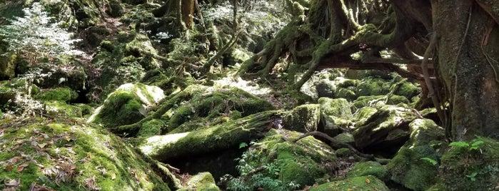 苔むす森 is one of Yakushima.