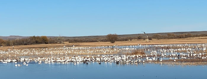 Bosque del Apache National Wildlife Refuge is one of Lugares favoritos de Krzysztof.