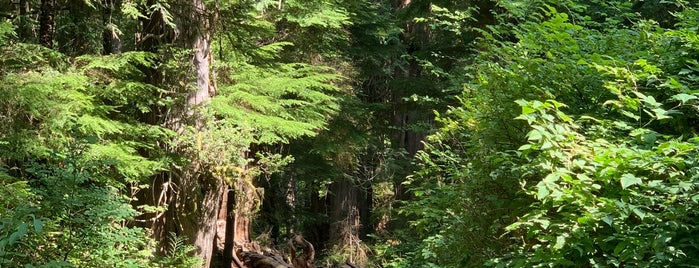 Big Cedar is one of Olympic NP.