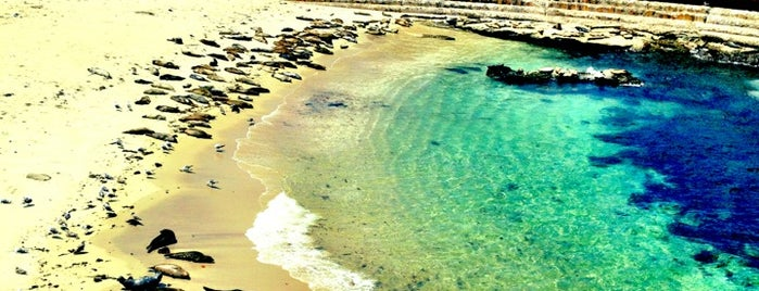 La Jolla Cove is one of CALiFORNiA.