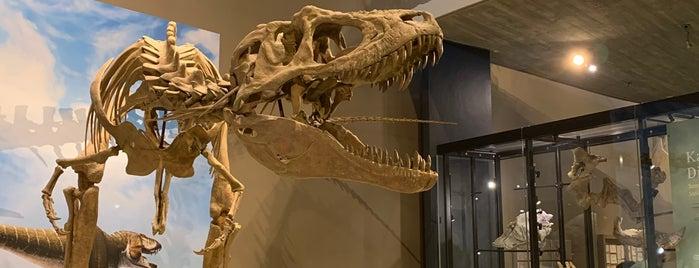 Natural History Museum of Utah is one of สถานที่ที่ Kirill ถูกใจ.