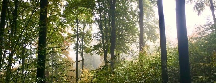 Kletterwald Taunus – Forest Adventures is one of Wiesbaden & Umgebung.