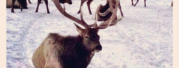 National Elk Refuge is one of Guide to Jackson's best spots.