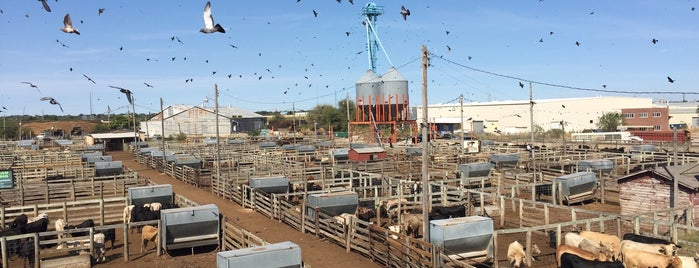 Oklahoma National Stockyards is one of Route 66 Roadtrip.