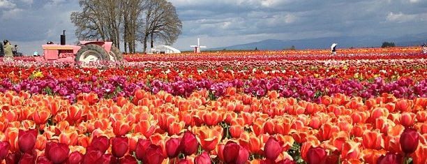 Wooden Shoe Tulip Farm is one of Oregon.