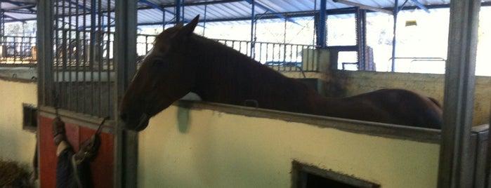 חוות סוסים בית ספר לרכיבה is one of Israel 👮.