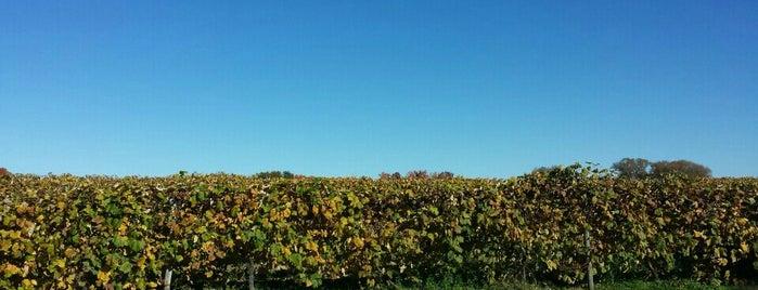 Sparkling Ponds Winery is one of Chris 님이 저장한 장소.