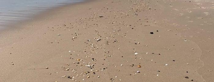 Wainscott Beach is one of Lieux qui ont plu à Gabbie.