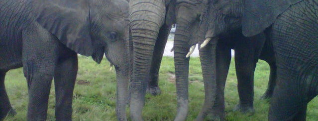 Knysna Elephant Park is one of South Africa.
