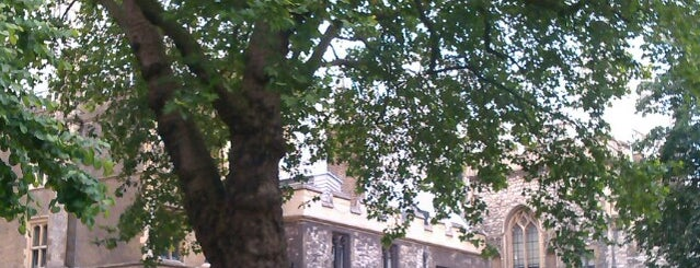 Dean's Yard is one of The Great Trees of London.