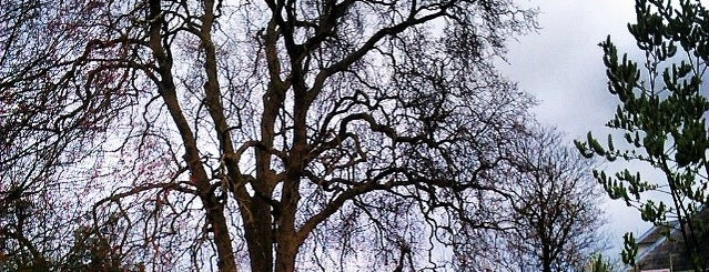 Sutton Ecology Centre is one of The Great Trees of London.