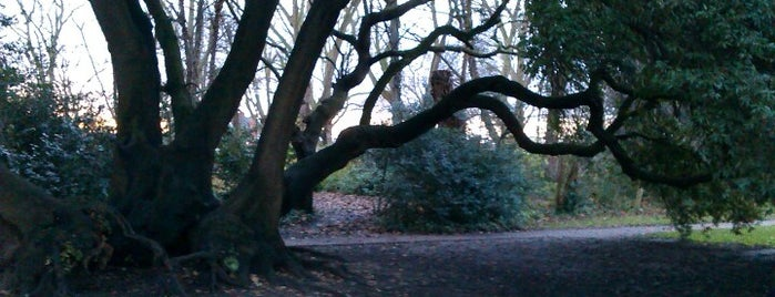 Fulham Palace Gardens is one of The Great Trees of London.