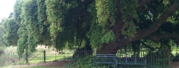 Osterley Park is one of The Great Trees of London.