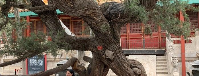 Imperial Garden is one of Beijing.